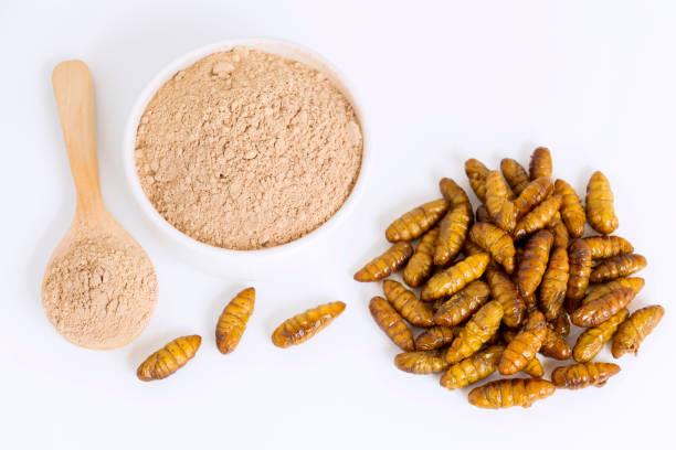 silkworm pupae (bombyx mori) pulver. insekten mehl für den verzehr als lebensmittel aus gekochtem insektenfleisch in schüssel und löffel auf weißem hintergrund ist eine gute quelle für eiweiß essbar für entomophagie-konzept. - mehlmotten stock-fotos und bilder