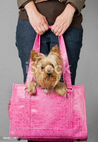 Silky terrier in dog carrier.  Please see my portfolio for other dog and animal related images.