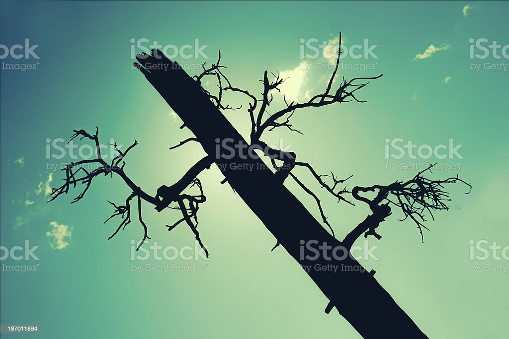 Sillhouette of a dead tree royalty-free stock photo