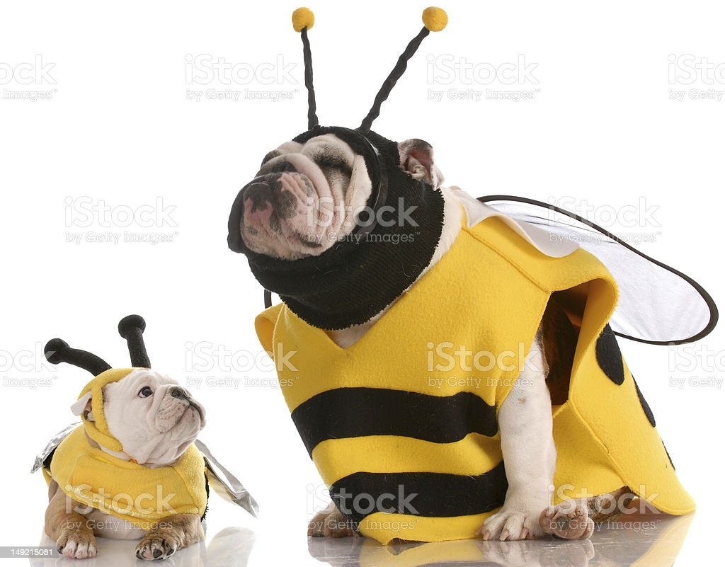 silly bees stock photo