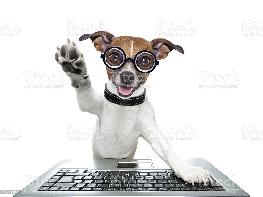 silly computer dog stock photo