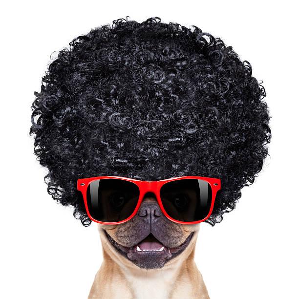 lustig hund - coole liebessprüche stock-fotos und bilder