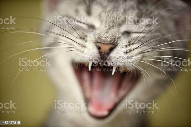 Silly kitten face picture id465457315?b=1&k=6&m=465457315&s=612x612&h=yaph8zlrl8siu35fthmvrrxqnmm2bm16h5xlhs3gfxy=