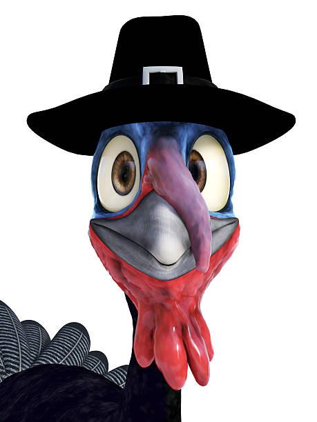 Silly toon turkey wearing pilgrim hat. Closeup of a funny silly looking cartoon turkey wearing a pilgrim hat. White background. pilgrim stock pictures, royalty-free photos & images