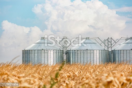 Modern metal silos in a corn field on a beautiful day with beautiful clouds in background.