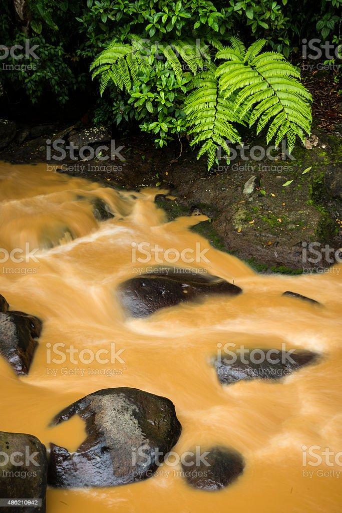 XXXL: Silt laden stream in a tropical rainforest stock photo