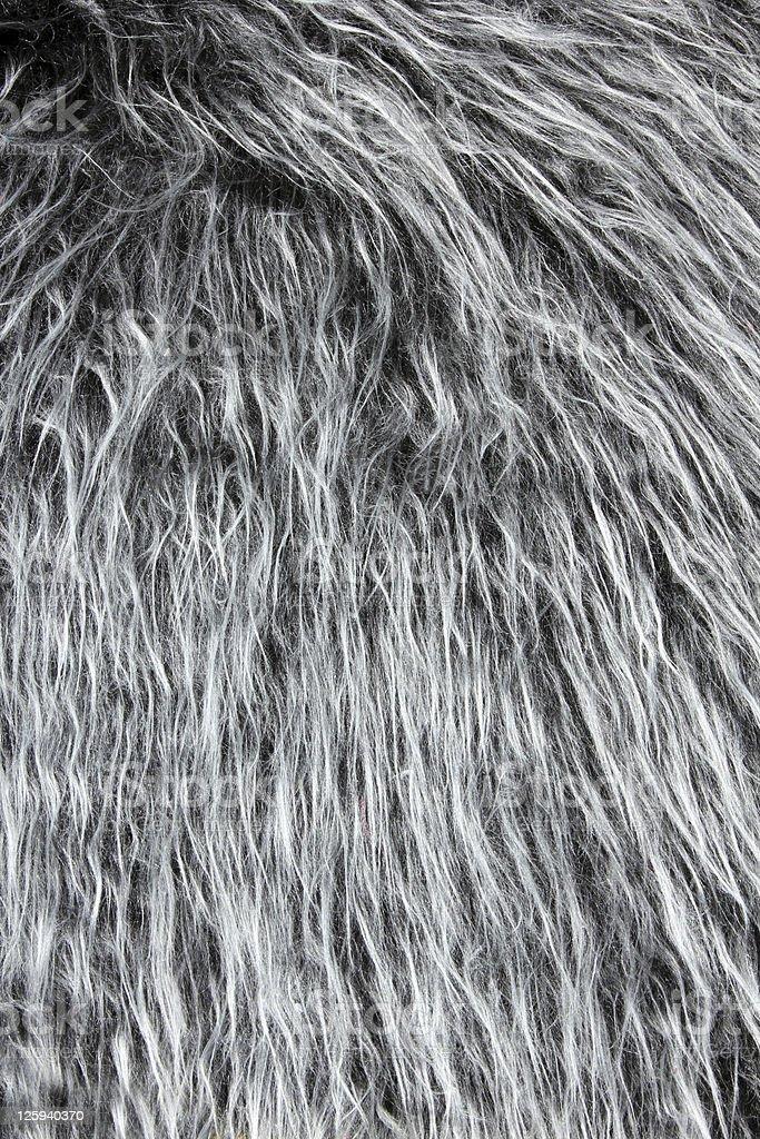back gorila de plata fondo de cabello - foto de stock