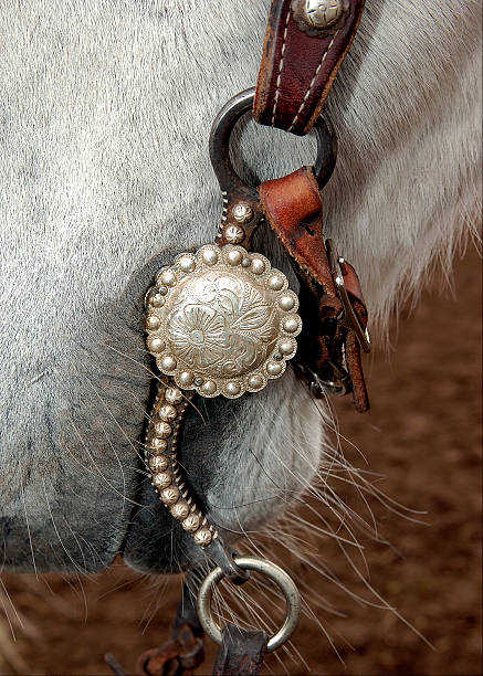 silver bit - horse bit stock photos and pictures