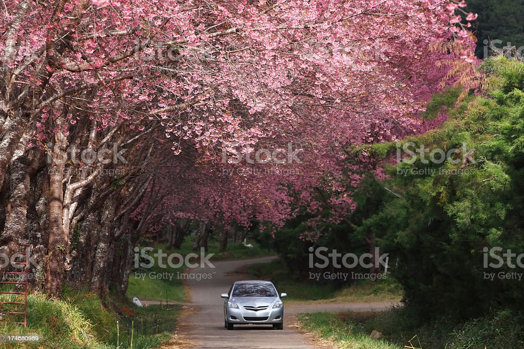 Silver car traveling on holiday through forest stock photo