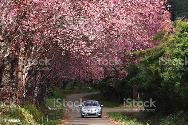 Silver Car Traveling On Holiday Through Forest Stock Photo - Download Image Now
