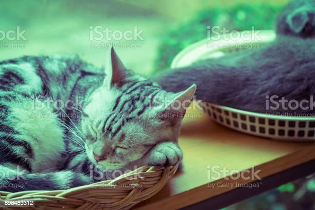 Silver cloud style cat sleep in basket with vintage filter can use to picture id896489312?b=1&k=6&m=896489312&s=612x612&h=q2mfwo7v2tq7fqlquyvxqxwl10 jcxucixgvsxpdsfe=