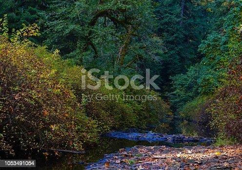 Northwest Oregon's Cascade Range Foothills. Willamette National Forest Edge. Silver Falls State Park Ravine. Silver Creek In October.