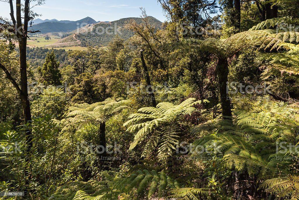 silver ferns growing in forest stock photo