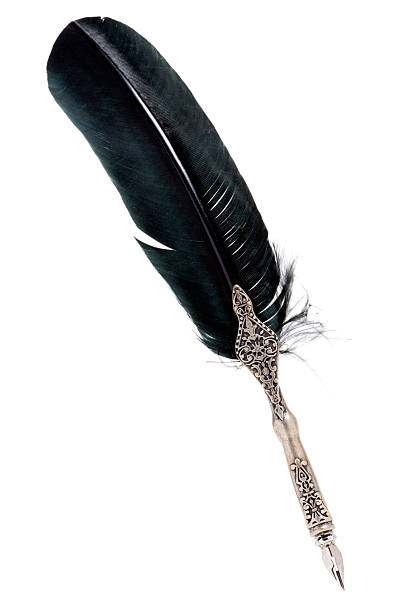 silver quill with black feather on white - quill stock photos and pictures