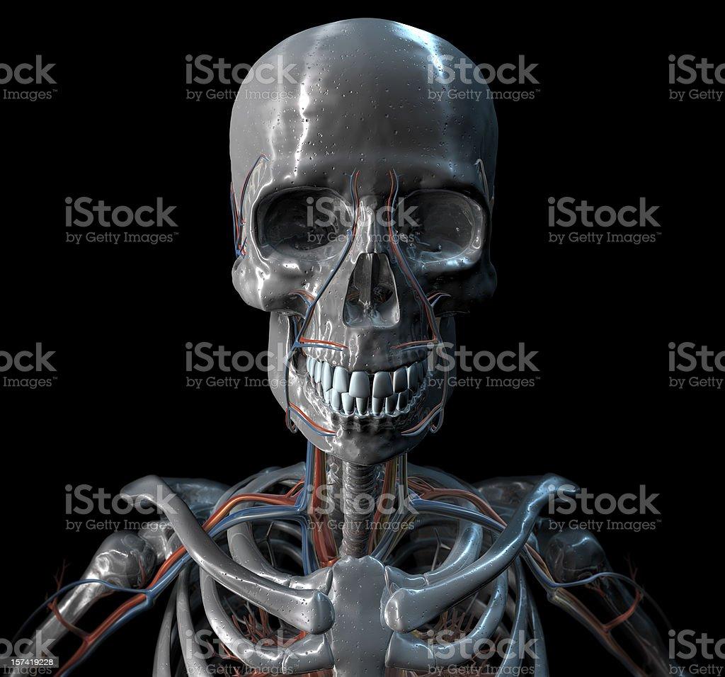 Silver Skull royalty-free stock photo