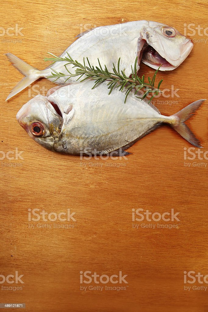 Silver Trevally stock photo