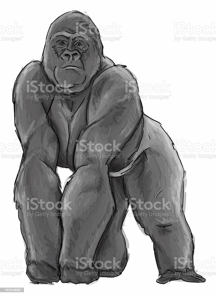 Silverback Gorilla Drawing Stock Photo & More Pictures of ...