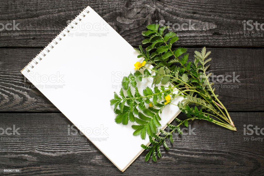 Silverweed (Potentilla anserine) and notebook stock photo