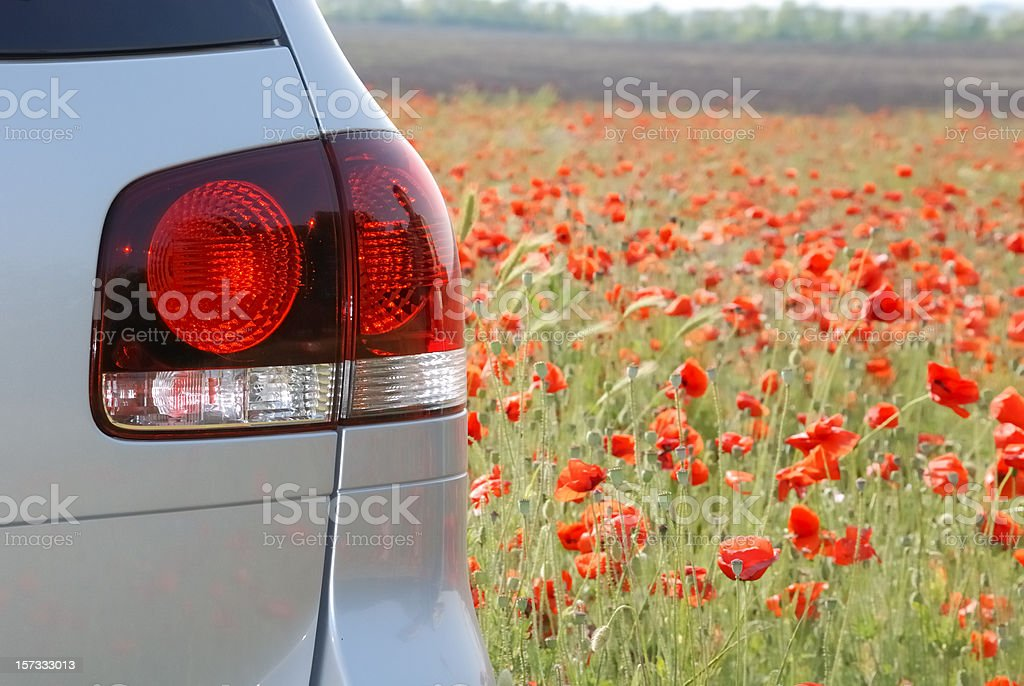 silvery new SUV in the poppy field, view from behind stock photo