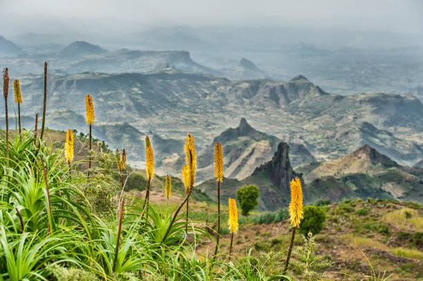 yamdrok-gebergte in ethiopië met fakkel lelie bloemen - torch lily stockfoto's en -beelden