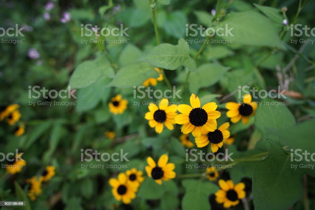 Similar to the sunflower stock photo