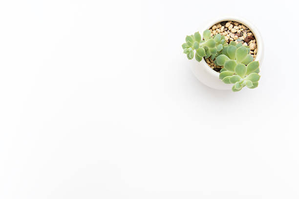 simple background stock photo