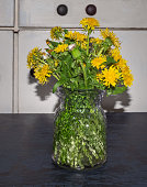 A simple bouquet of wildflowered yellow dandelions in a glass vase on a dark table of a rustic room
