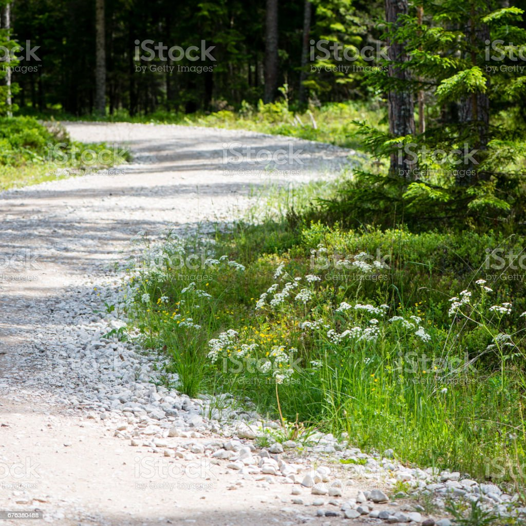 simple country road in summer stock photo