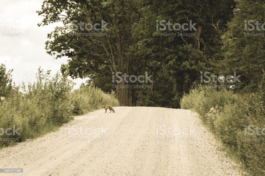 simple country gravel road in summer at countryside with trees around...