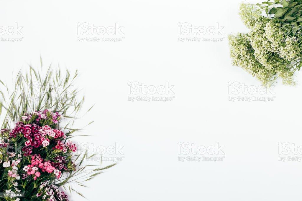 Simple Plano Floral Pone Arreglo Sobre Fondo Blanco Foto De Stock Y Más Banco De Imágenes De Animales Salvajes