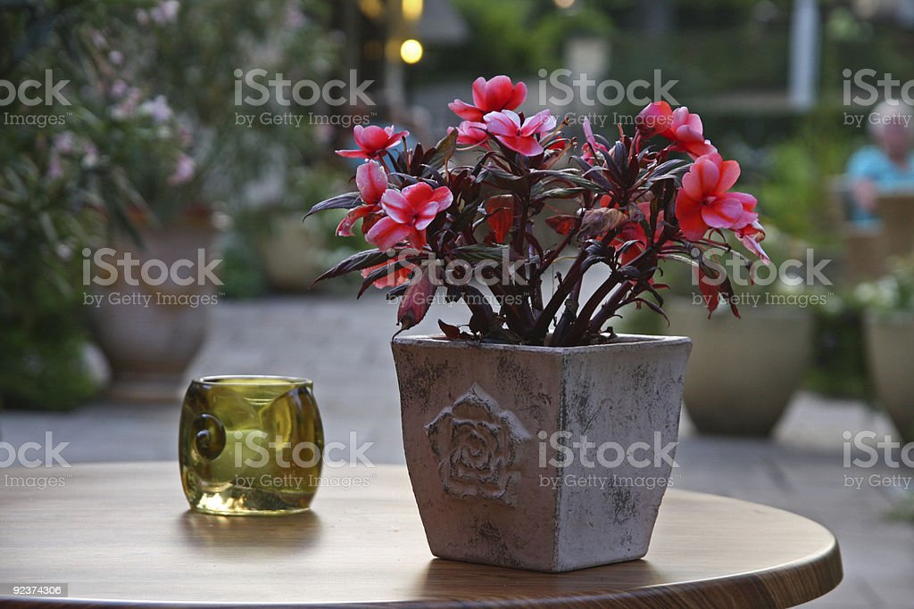 Simple plant on a table royalty-free stock photo