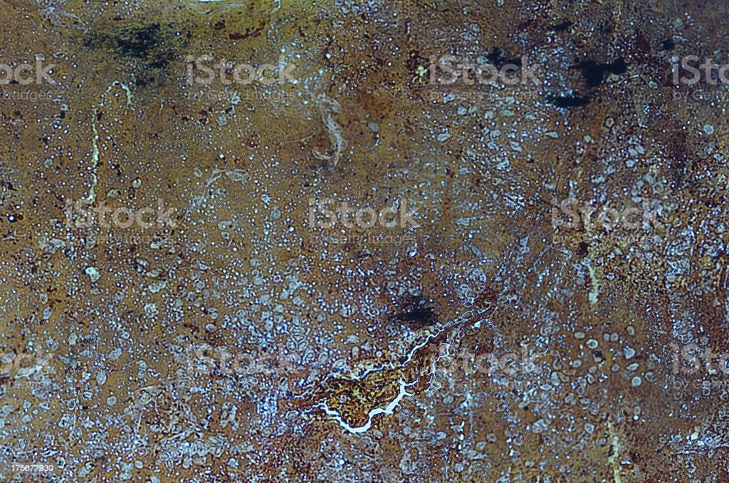 simple squamous epithelium stock photo