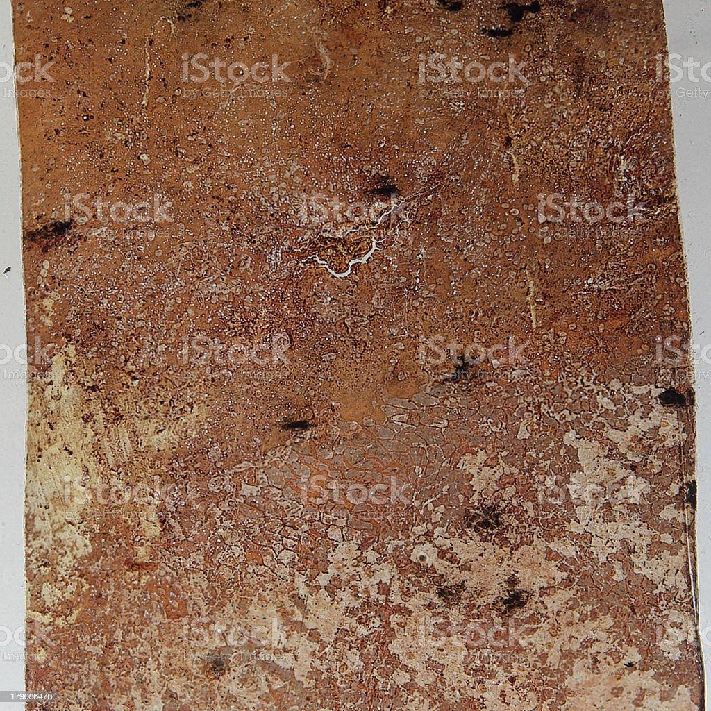simple squamous epithelium royalty-free stock photo