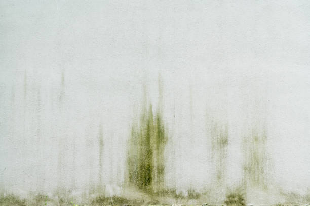 simple white, weathered wall for backgrounds stock photo