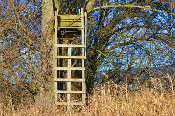 Simple wooden raised tree ladder stand secured to a tree as vantage point for hunters tree stand hide for hunters high seat stock pictures, royalty-free photos & images