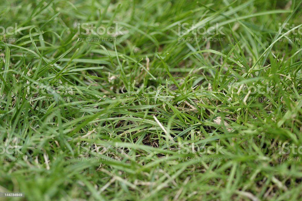 Simply grass! royalty-free stock photo