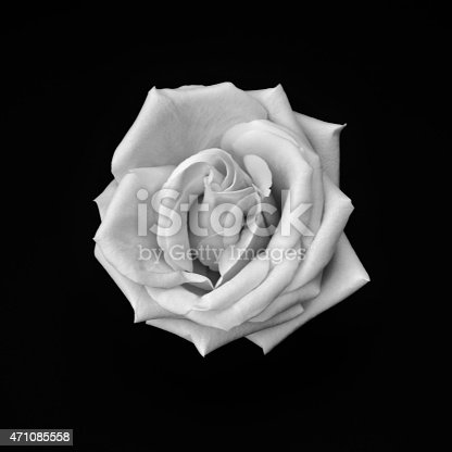 612015846 istock photo Simply Rose - Black And White Image 471085558