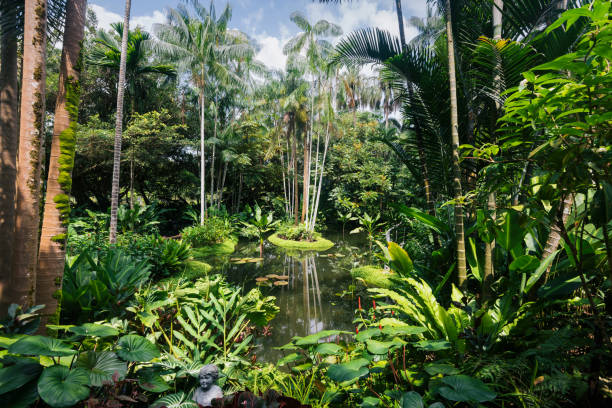 singapore botanic gardens - singapore nature stock photos and pictures