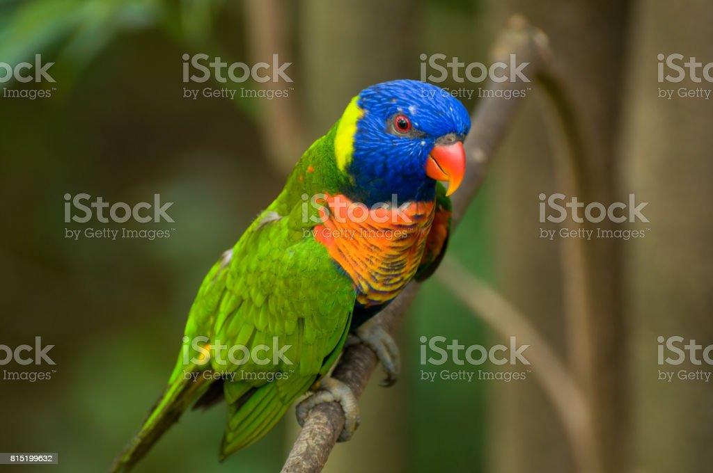 Singapore Jurong Bird Park stock photo