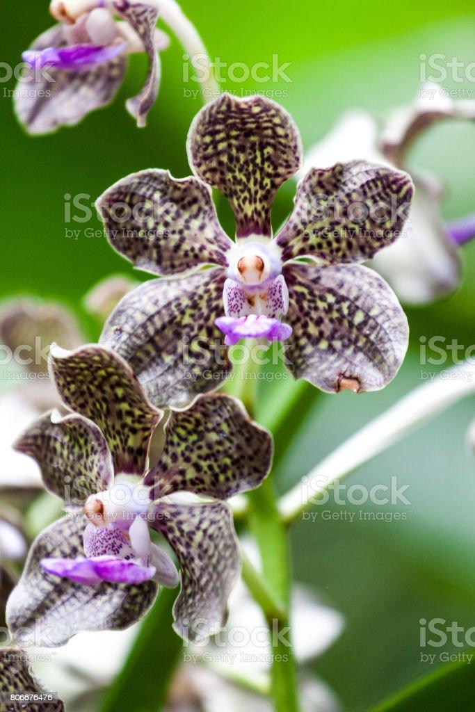 Singapore Orchid Garden stock photo