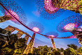 istock Singapore Supertrees and Skywalk in Gardens by the bay 622423178