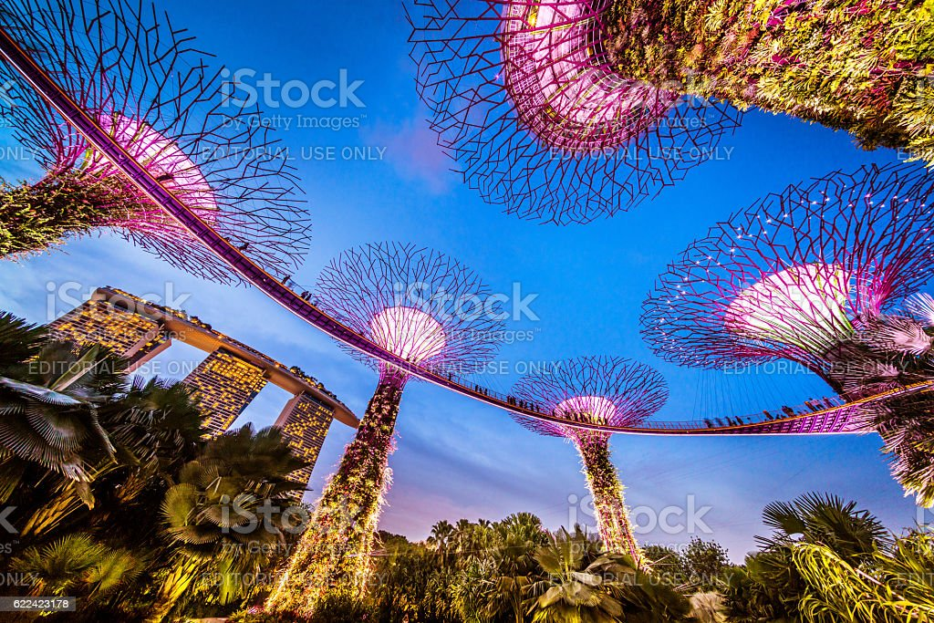 Singapore Supertrees and Skywalk in Gardens by the bay stock photo