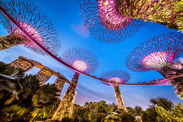 singapore supertrees and skywalk in gardens by the bay - marina bay singapore stockfoto's en -beelden