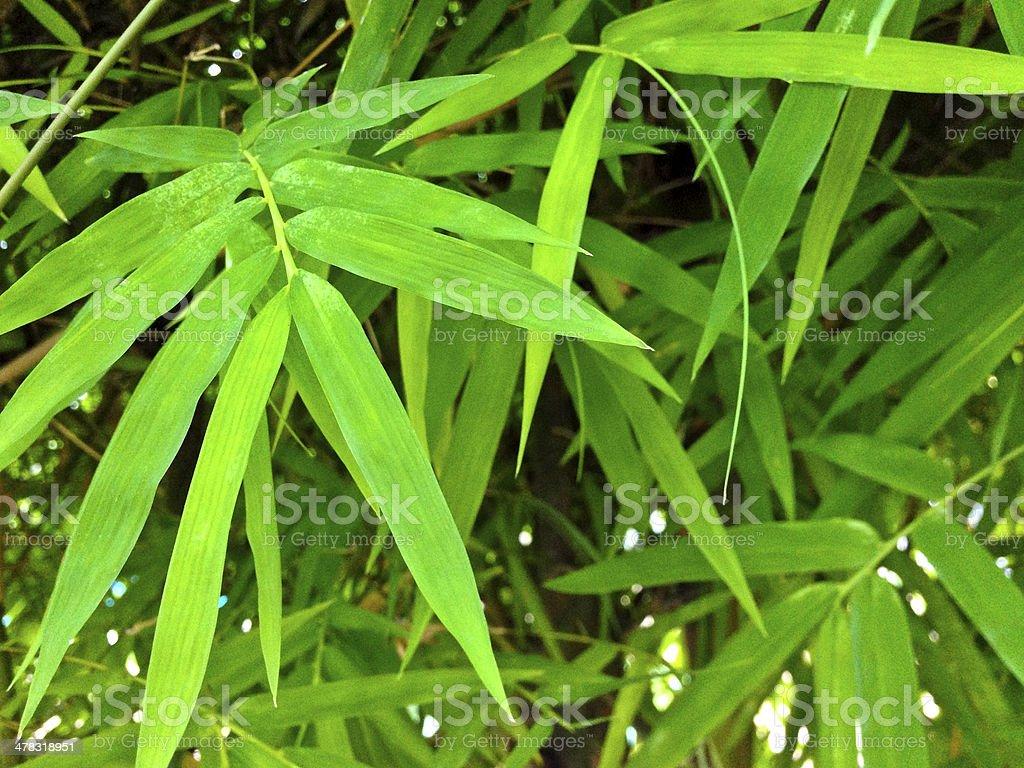 Singapore, tropical foliage. royalty-free stock photo