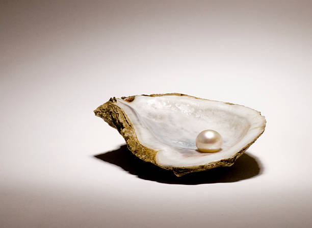 singe pearl sitting in an oyster shell on a light background - oyster stock pictures, royalty-free photos & images