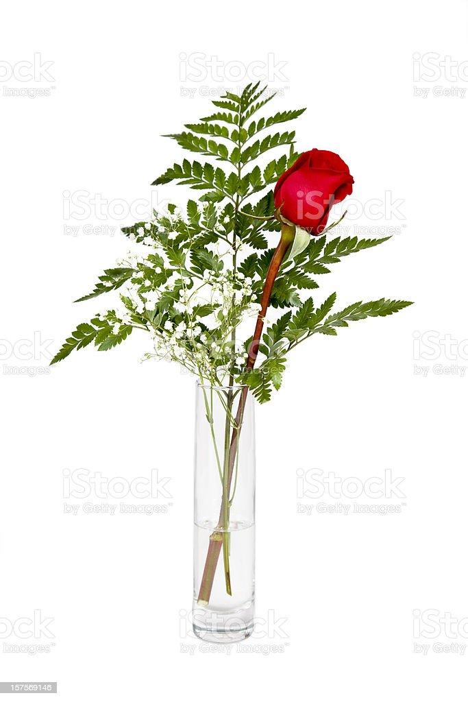 Singe rose in vase stock photo