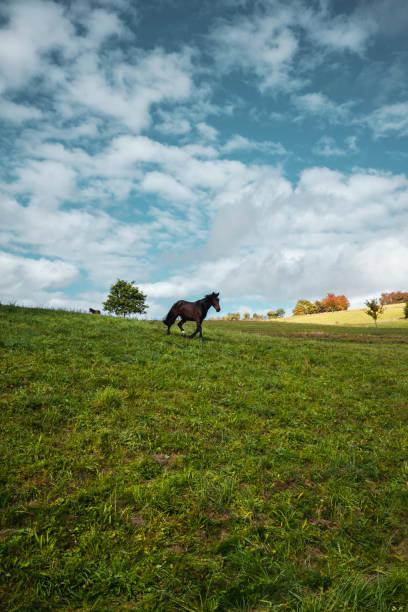 singel horse - pferdezeitschrift stock-fotos und bilder