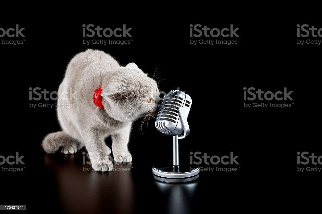 singer cat royalty-free stock photo
