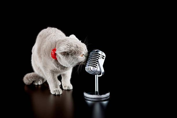 Singer cat picture id175427844?b=1&k=6&m=175427844&s=612x612&w=0&h=beyn1l8qoktmcpf5id33js9feqd7imen4gi7as9es0e=