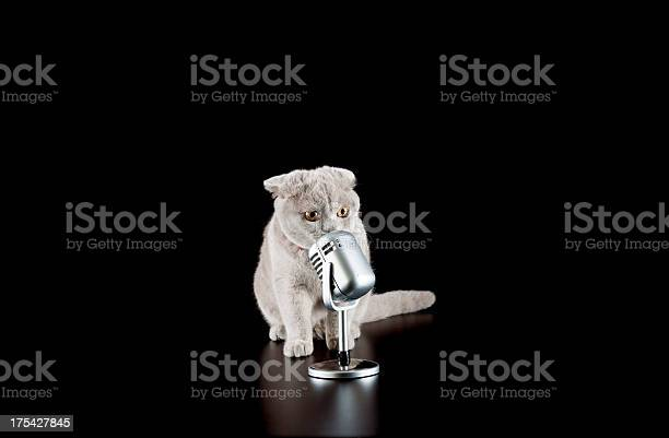 Singer cat picture id175427845?b=1&k=6&m=175427845&s=612x612&h=5ammo2jmn91m6tpkpy740bcgrdhq8rodgrr0fjz qbq=